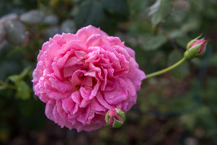 Find beautiful flowers grown on Acton property.