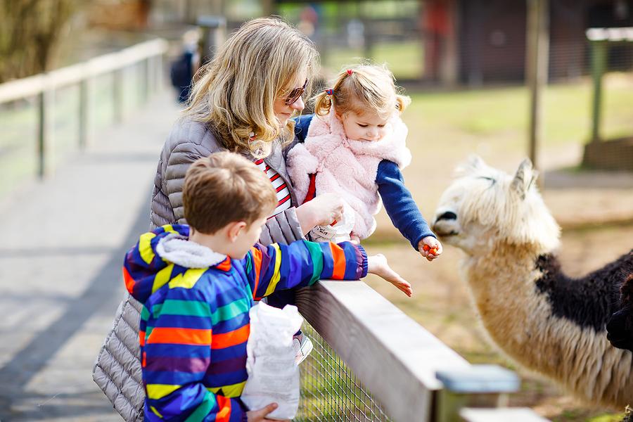 Visit alpacas on Acton real estate