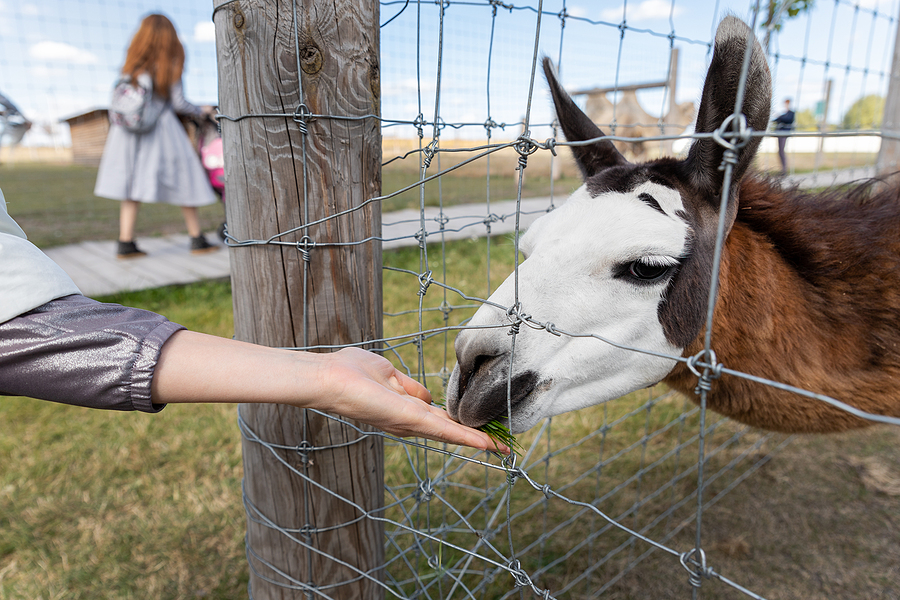 Visit animals near your Acton home at the animal sanctuary.