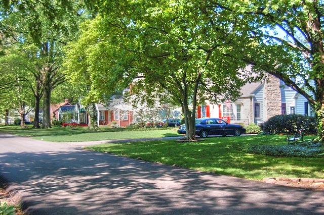 Tree Lined St Matthews Street
