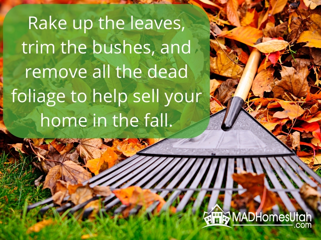 Image of leaves being raked up.