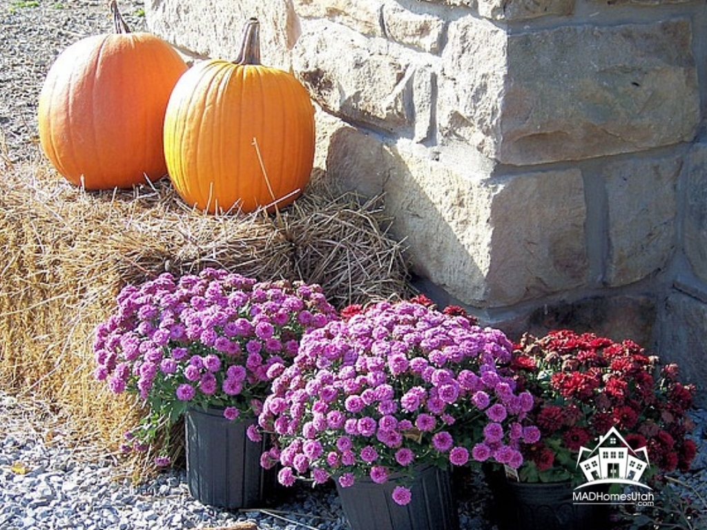 Picture of pumpkins and mums