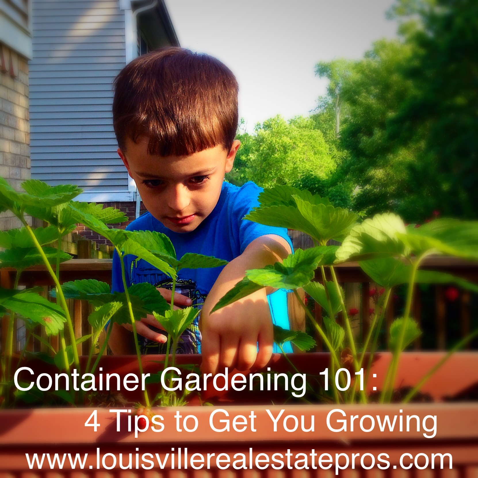 Container Gardening 101: 4 Tips to Get You Growing
