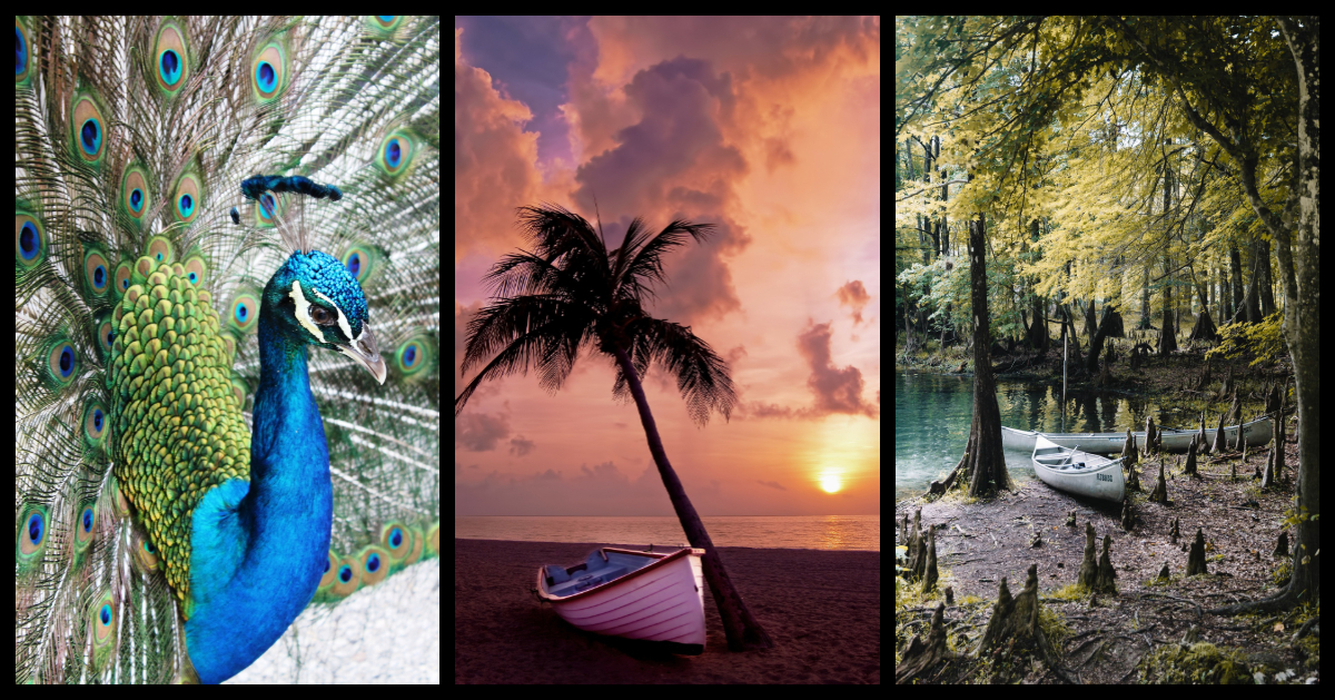 Living In Panama City Beach