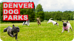 Best Dog Parks in Denver