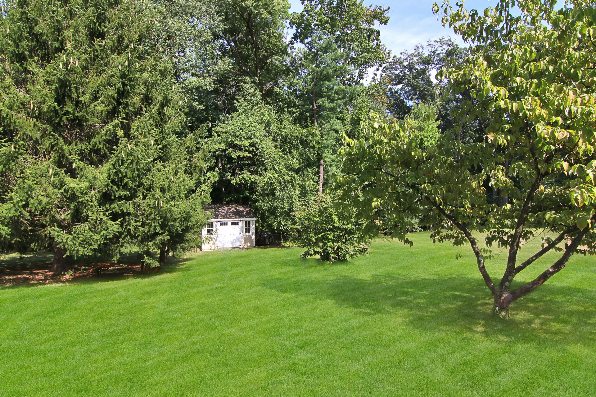30 Greenfield Avenue Backyard