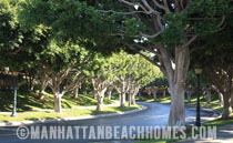 Manhattan Beach Village Lush Trees