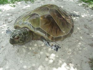 highland beach sea turtle