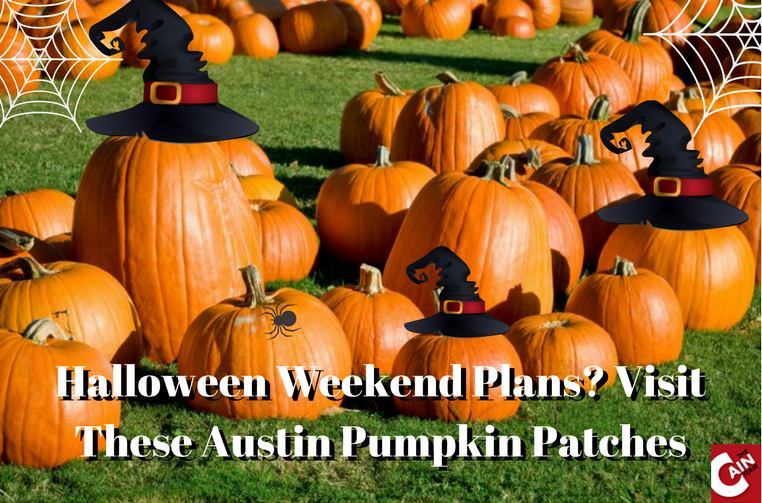 Halloween weekend in Austin Pumpkin Patches in Austin