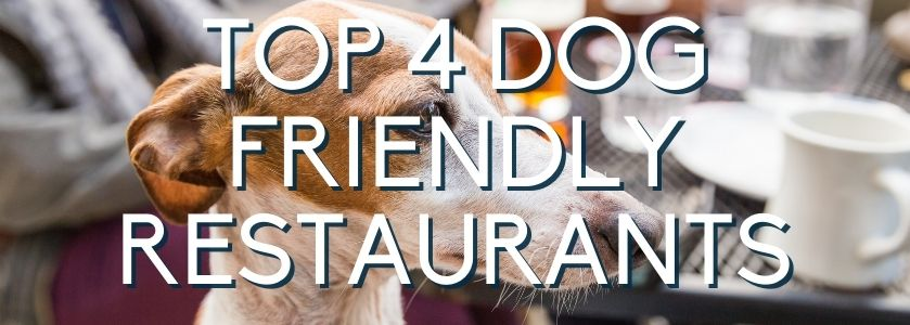 dog friendly restaurants in boca raton | blog header image