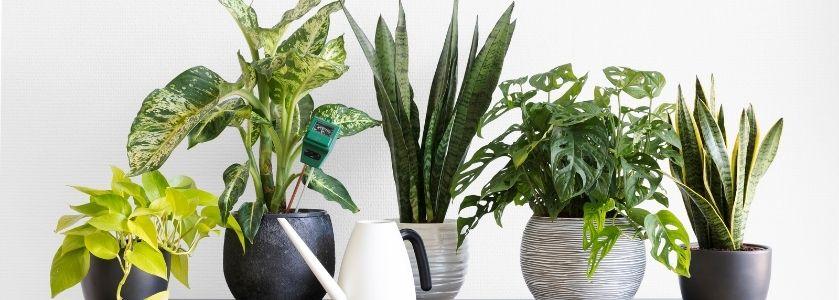 row of various indoor plants