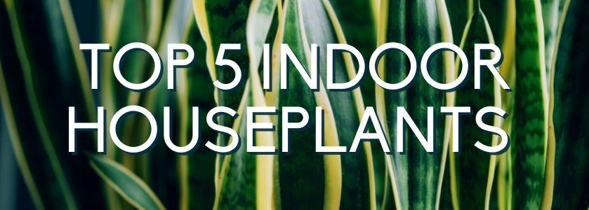 top 5 indoor houseplants | blog header image