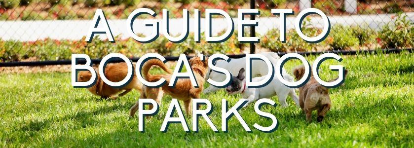 boca raton dog parks guide | blog header image