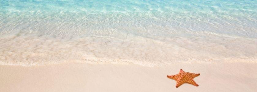 starfish on beautiful beach