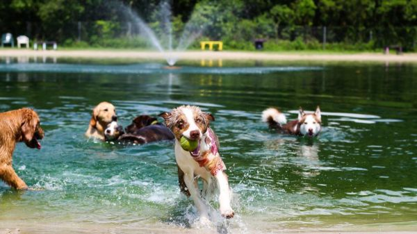 dogs playing in watering hole