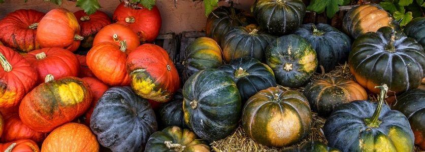 pumpkin patch festival   various pumpkins and gourds