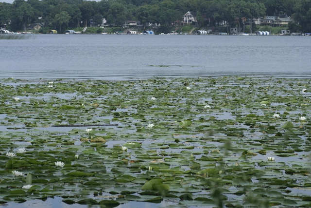 Phelps Bay - Lake Minnetonka