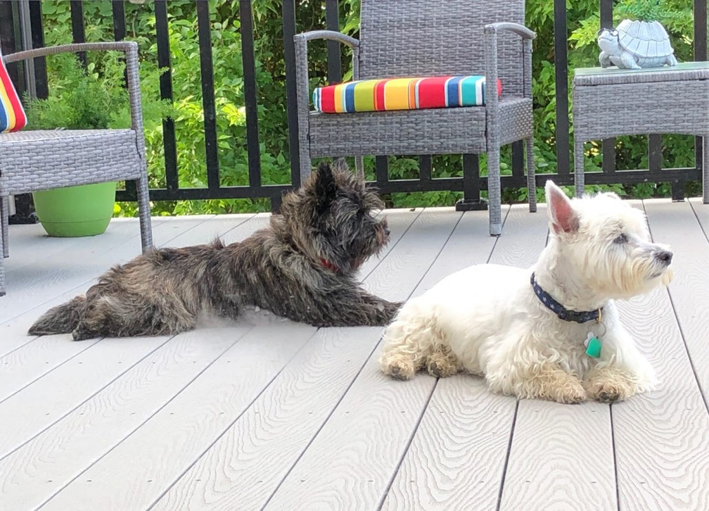 Bella and Ace Relaxing