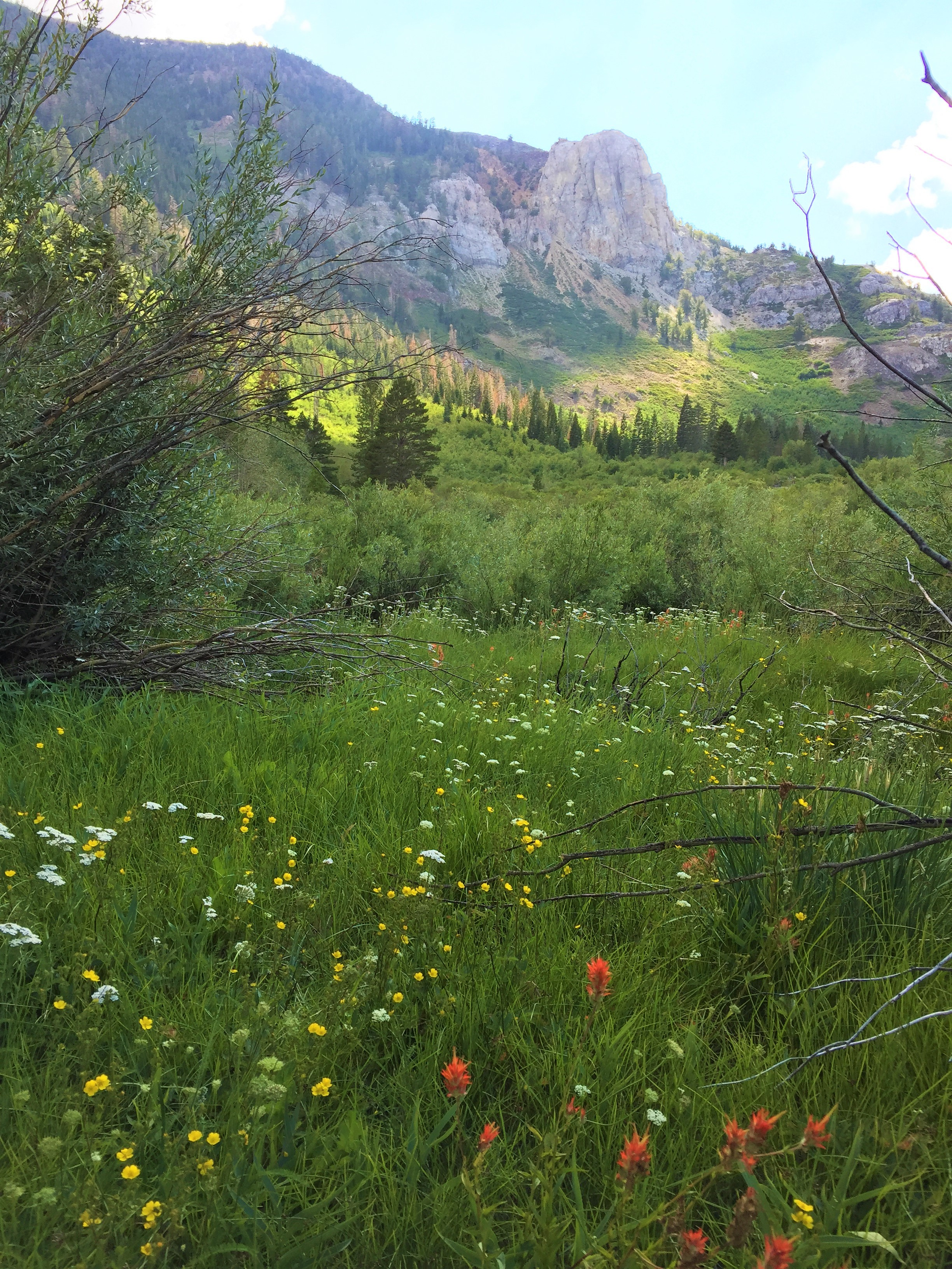 Snowcreek Meadow with Wildflowers and Mammoth Rock in Background