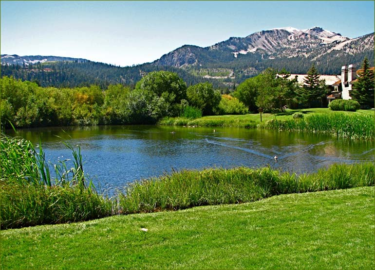 Meadow Area and Mammoth Creek Condos