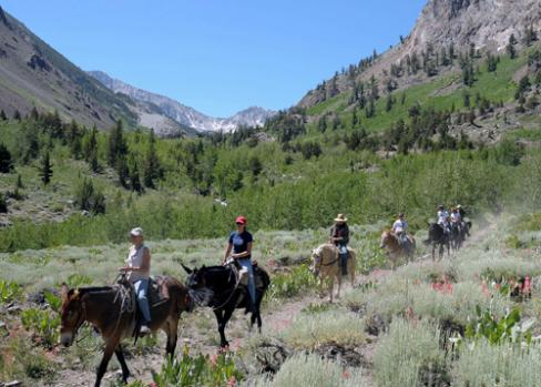 Summer Horseback Riding in Mammoth Lakes