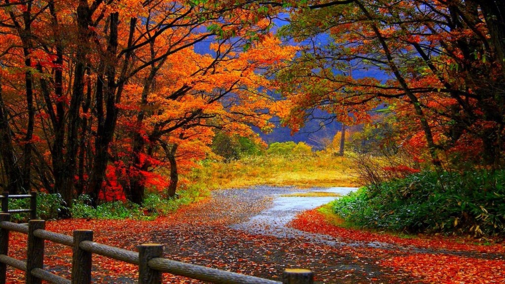 GORGEOUS FALL COLORS DISPLAY IN AUTUM