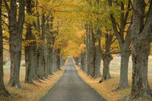 Autumn Trees in Louisville