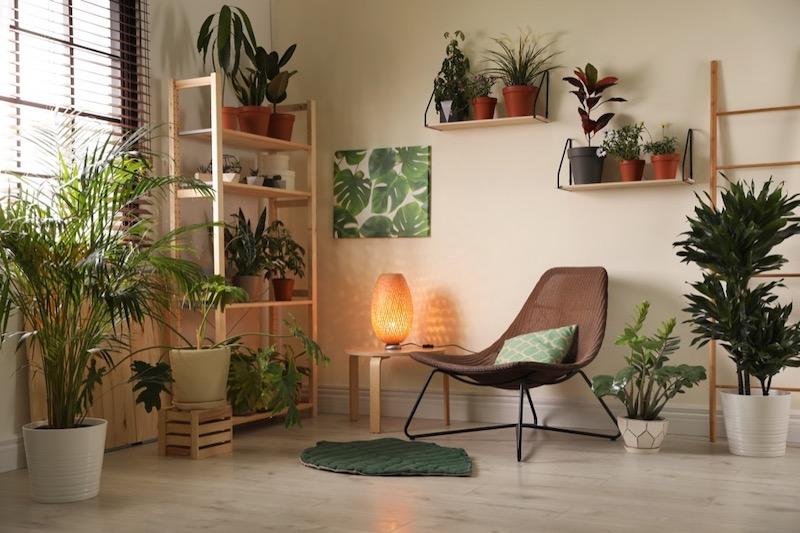 Plants Can Make a room Feel Calmer