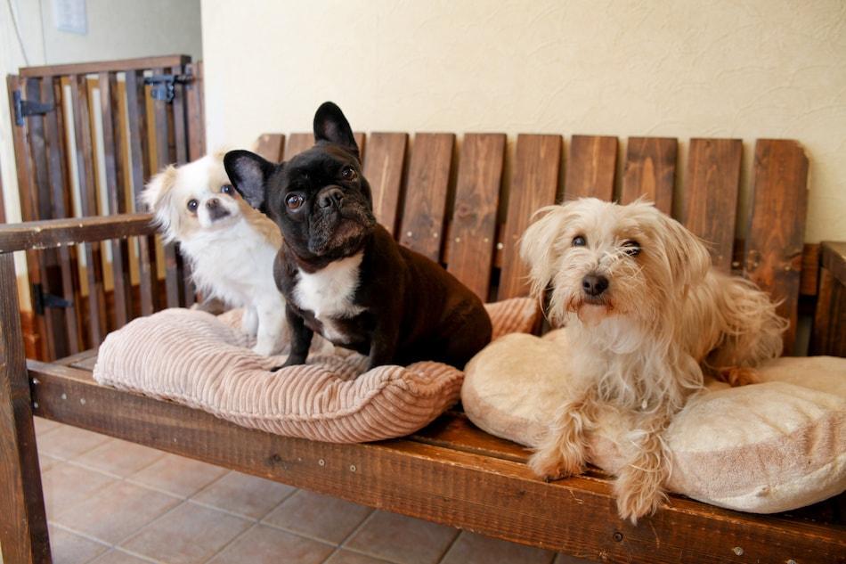 Pet Owner Staging Tips