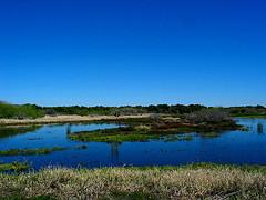 Myakka River State Park - Photo Credit: http://www.flickr.com/photos/csessums/4415114917/