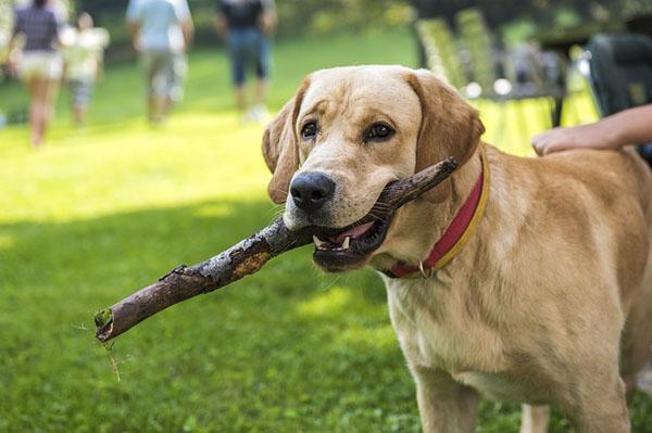 Dog - Image Credit: http://pixabay.com/en/users/DarkoStojanovic-638422/