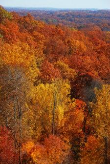 Indiana foliage