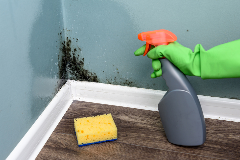 Does Your Home Have Mold? What You Should Be Looking For