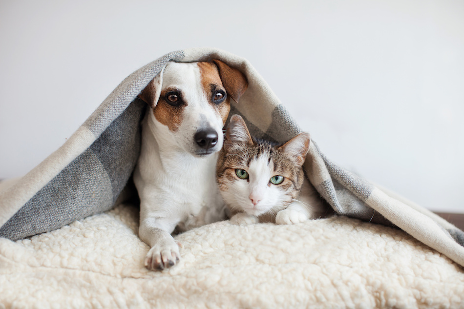 Selling a Home With Pets? 4 Can't-Miss Tips