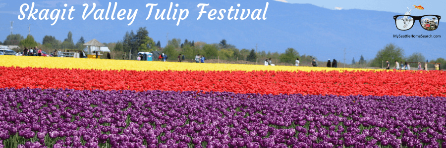 The Skagit Valley tulip festival