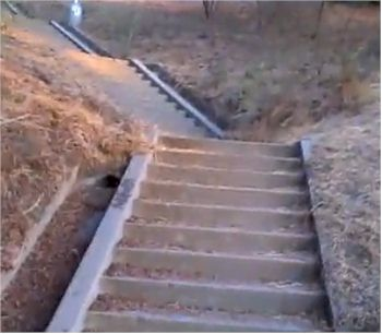 The Baxter Street Stairs in Echo Park have more than 230 steps!