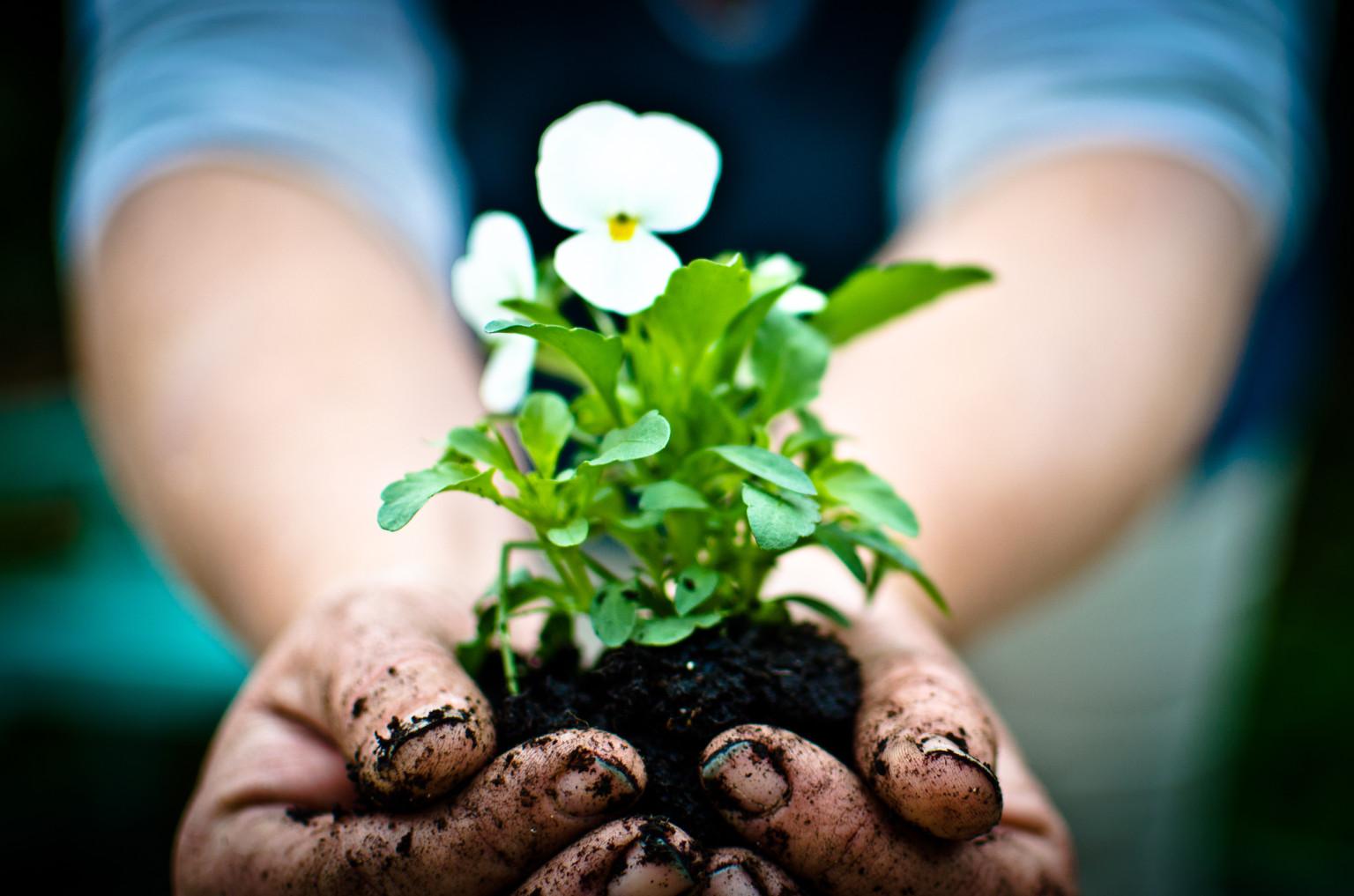 Edmonton gardening