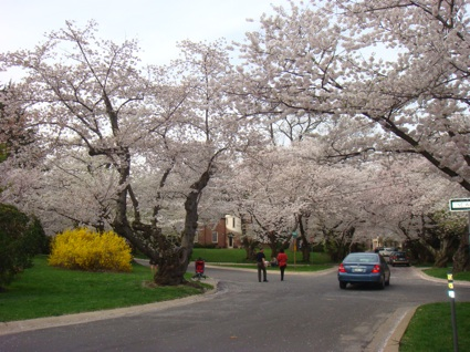 Kenwood - One of DC's Finest Neighborhoods