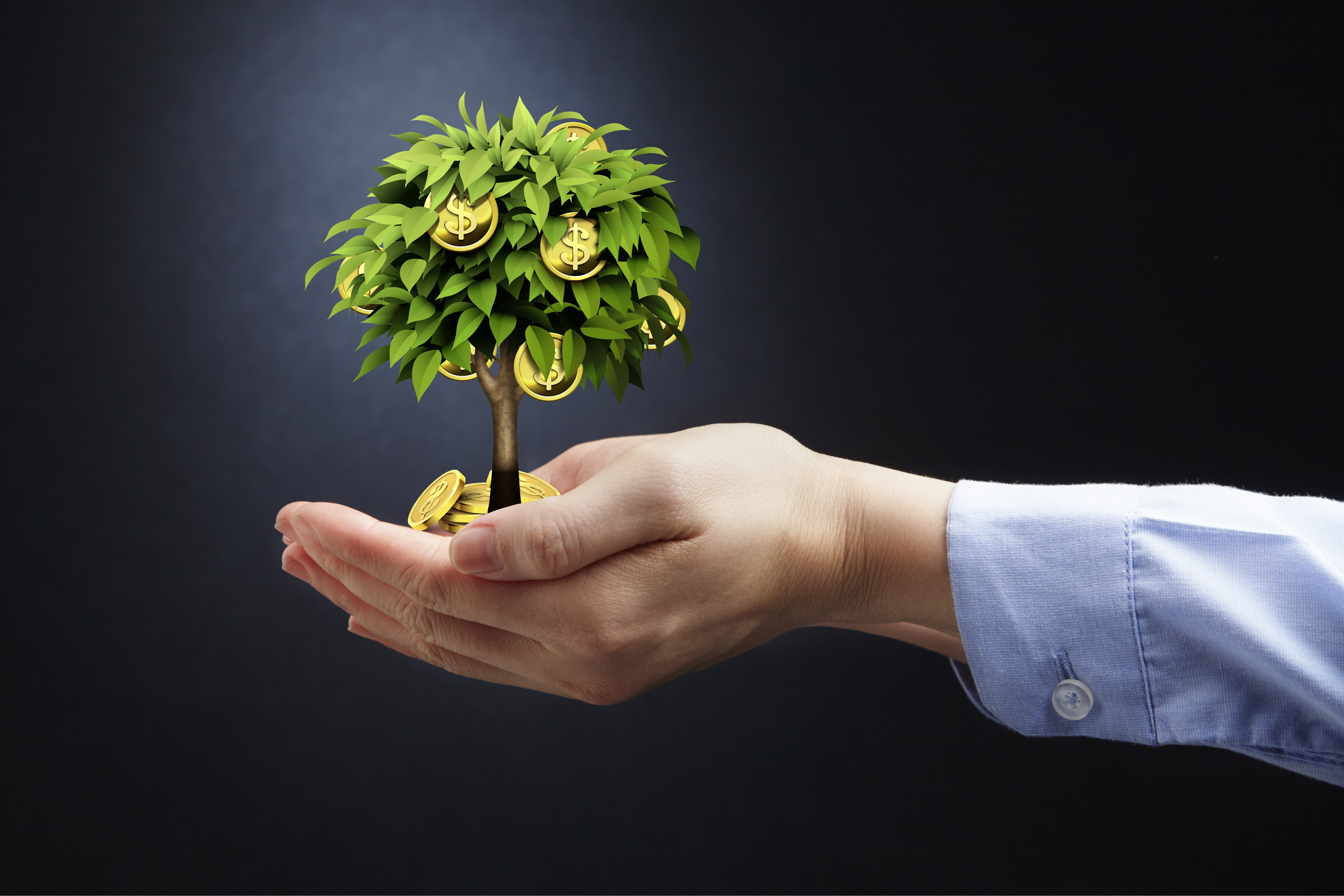 had holding money tree
