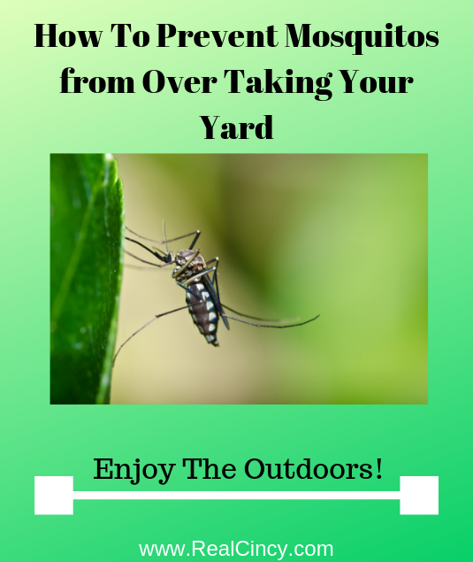 How To Prevent Mosquitos from Over Taking Your Yard
