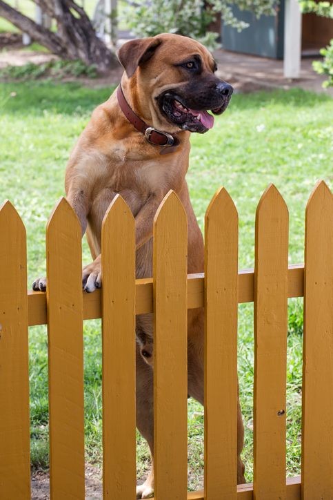 A fenced yard helps keep your pets safe and out of the path of traffic.