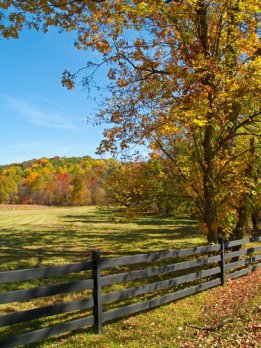 Horse Properties in Paris KY