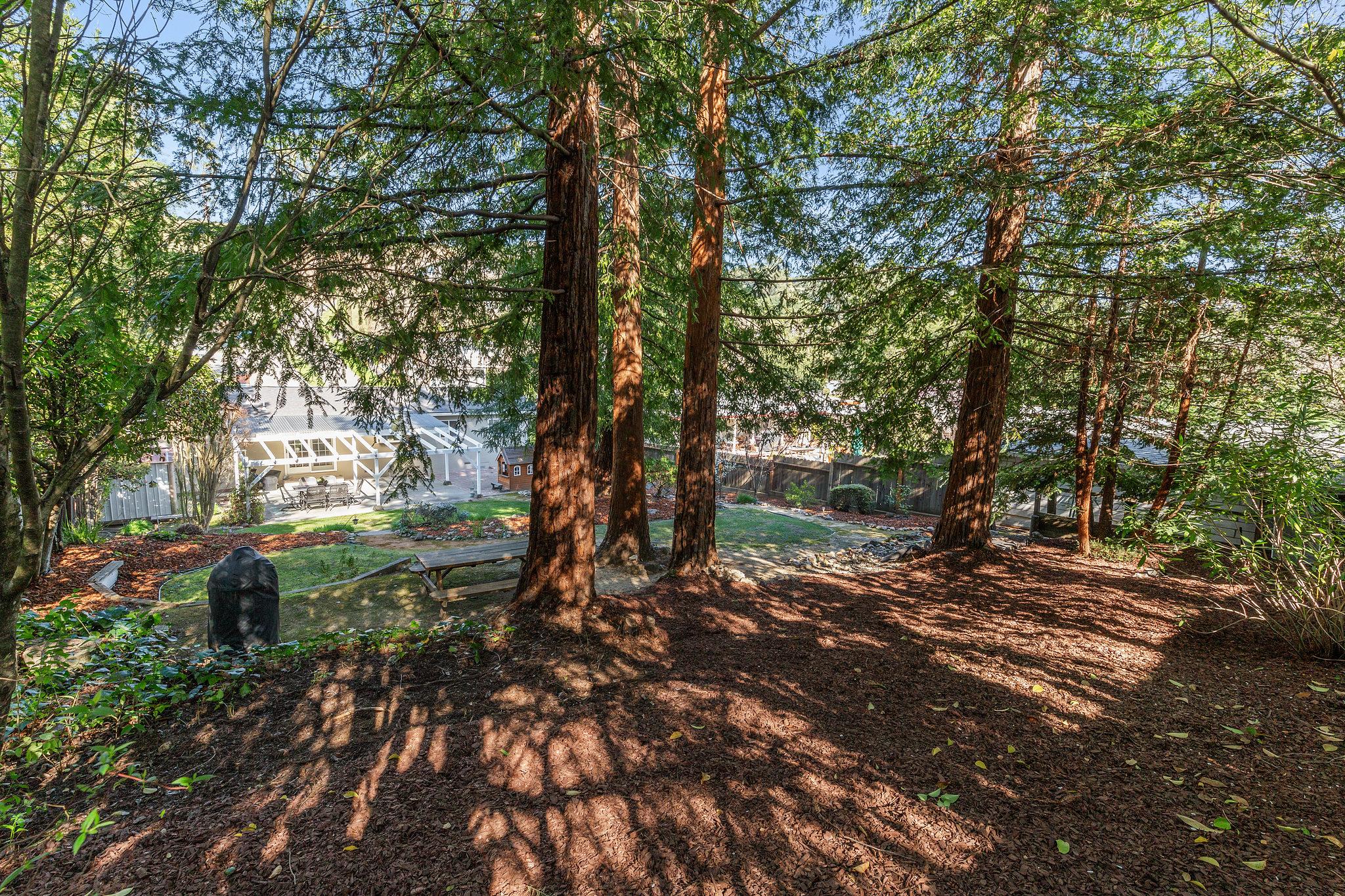 707 Cherry Redwood Grove