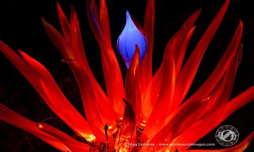 131019_2439_autumn_lights_festival_oakland_1280px-1024x682_500