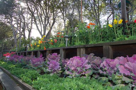 flower_boxes_448