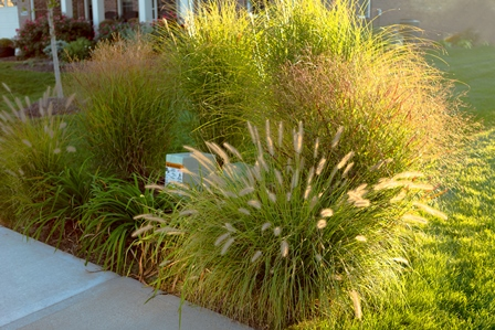 ornamental_grasses_448