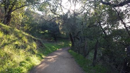 trail_448