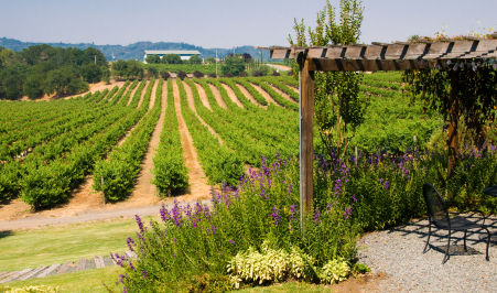 wine_country_451