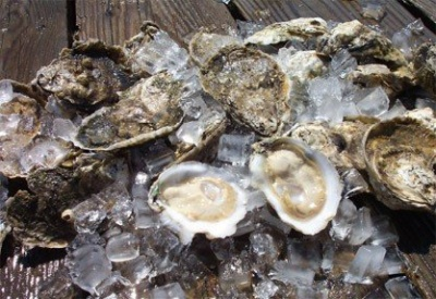 oysters_400_01