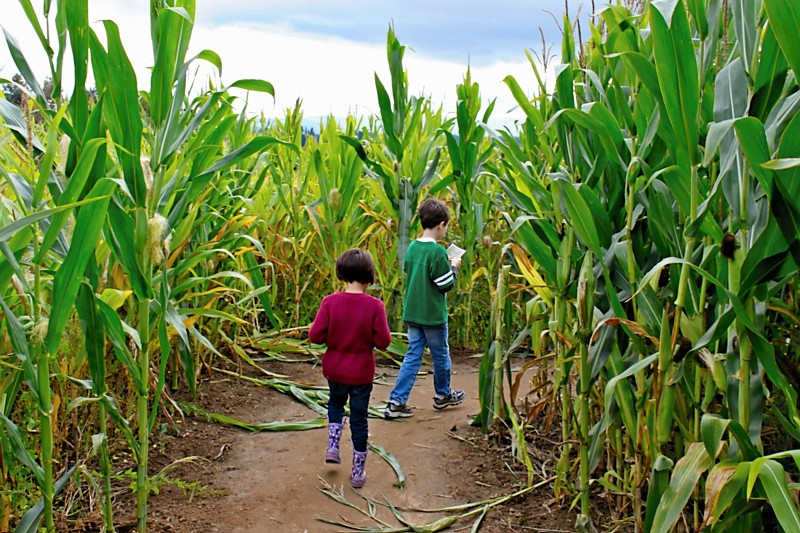 fall-corn-maze_800_01.